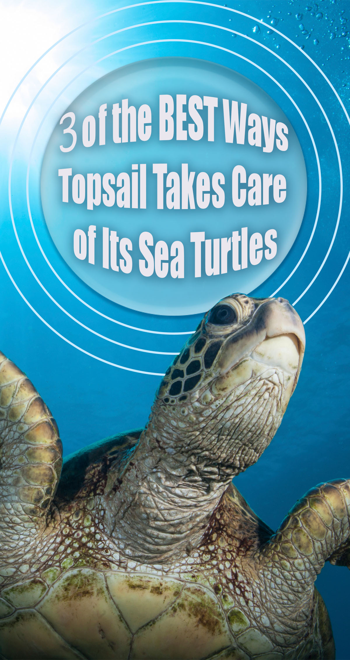 3 of the Best Ways Topsail Takes Care of Its Sea Turtles Pin