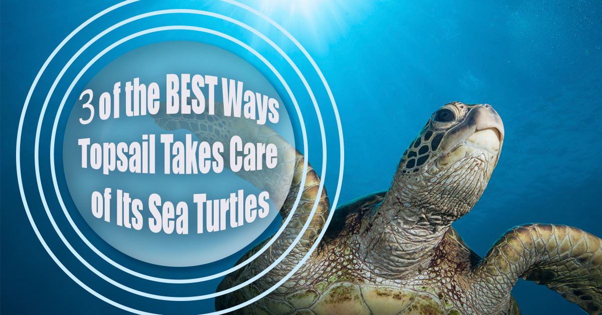 3 of the Best Ways Topsail Takes Care of Its Sea Turtles