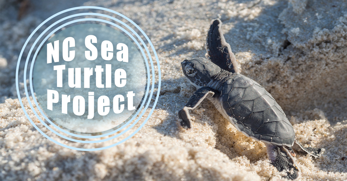 NC Sea Turtles Project