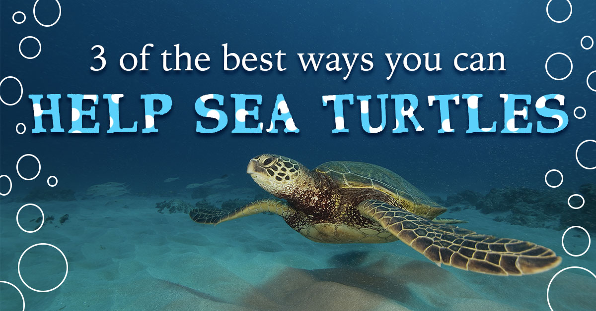 3 of the Best Ways You Can Help Sea Turtles
