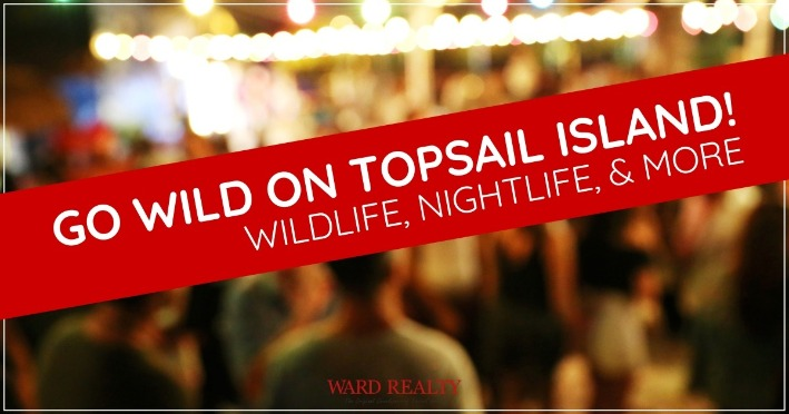 Go Wild On Topsail Island! Wildlife, Nightlife, and More | Ward Realty
