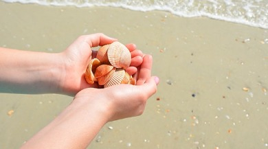 shells in hand on beach | Ward Realty Topsail Island