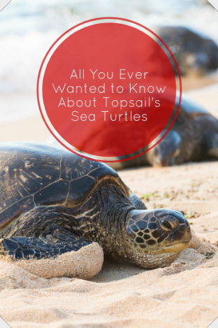 All You Ever Wanted to Know About Topsail's Sea Turtles | Ward Realty Topsail Island